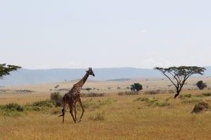NGO Photographers Alliance Travel Conservation